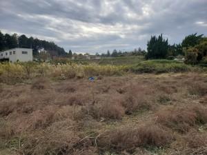 20201106 整備前の畑